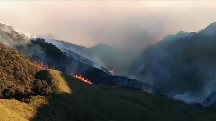 NDRF expresses concern over increasing magnitude of Nagaland's Dzukou valley fire